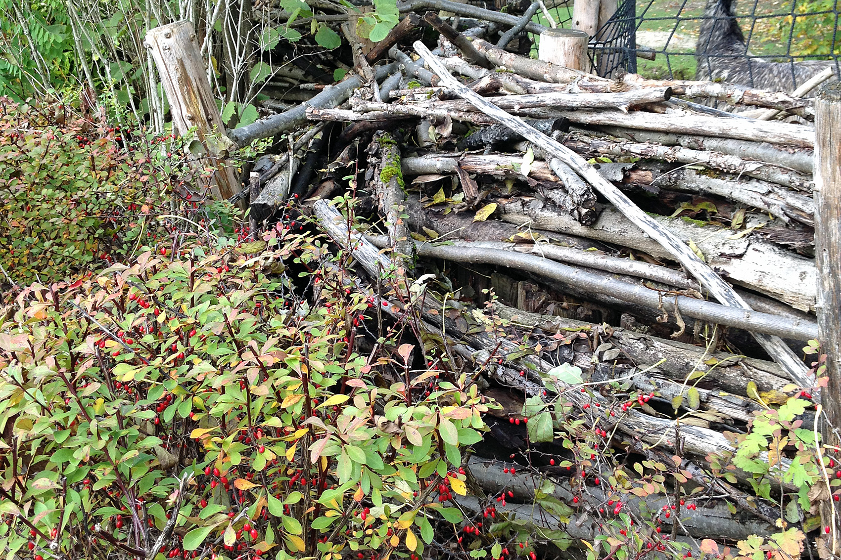 totholz im garten wie zum beispiel einen alten baumstamm oder knorrige ste native plants. Black Bedroom Furniture Sets. Home Design Ideas