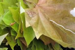 Blätterfaden für unsere Nützlinge