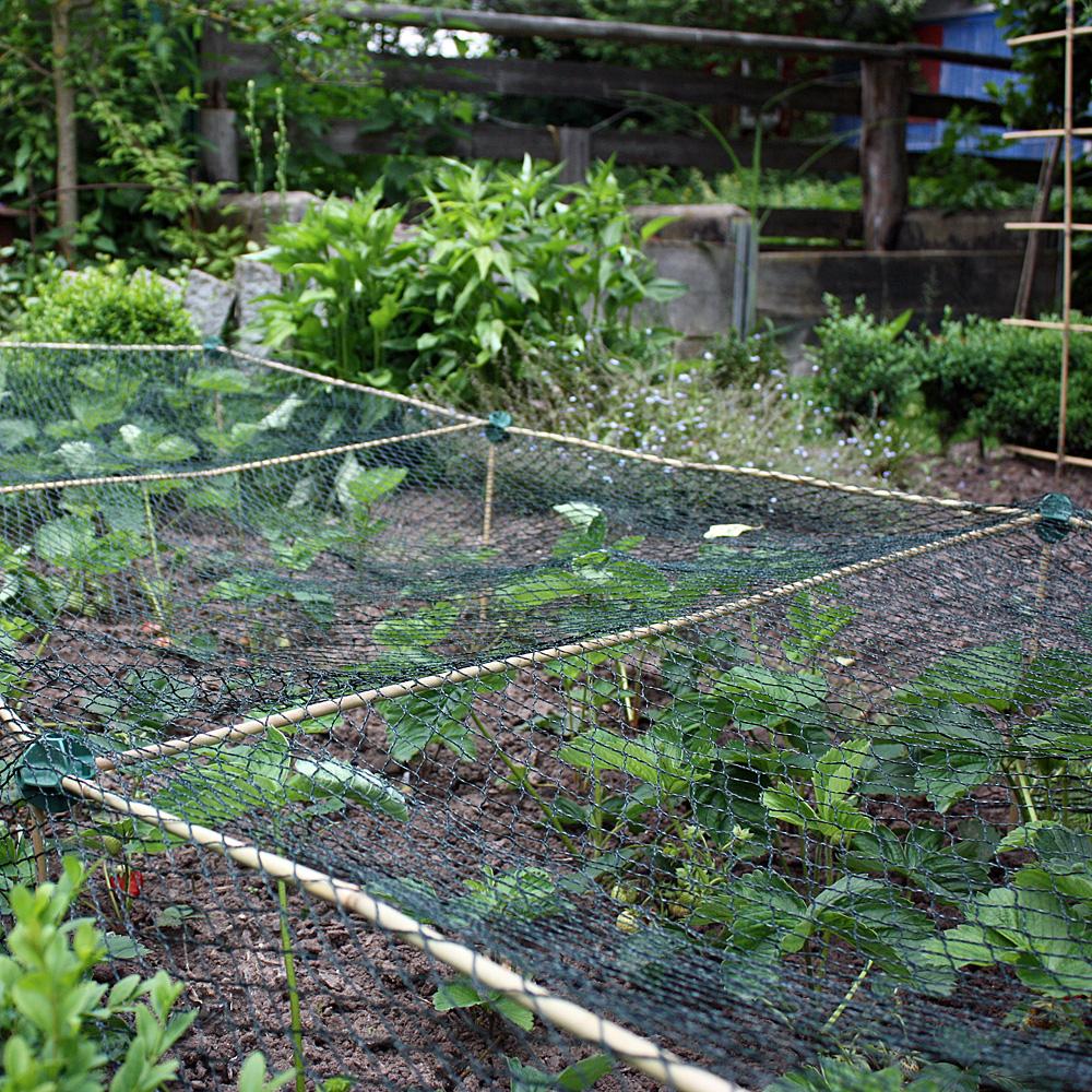 Gartnertipp Pflanz Pflegetipps Fur Erdbeeren Native Plants