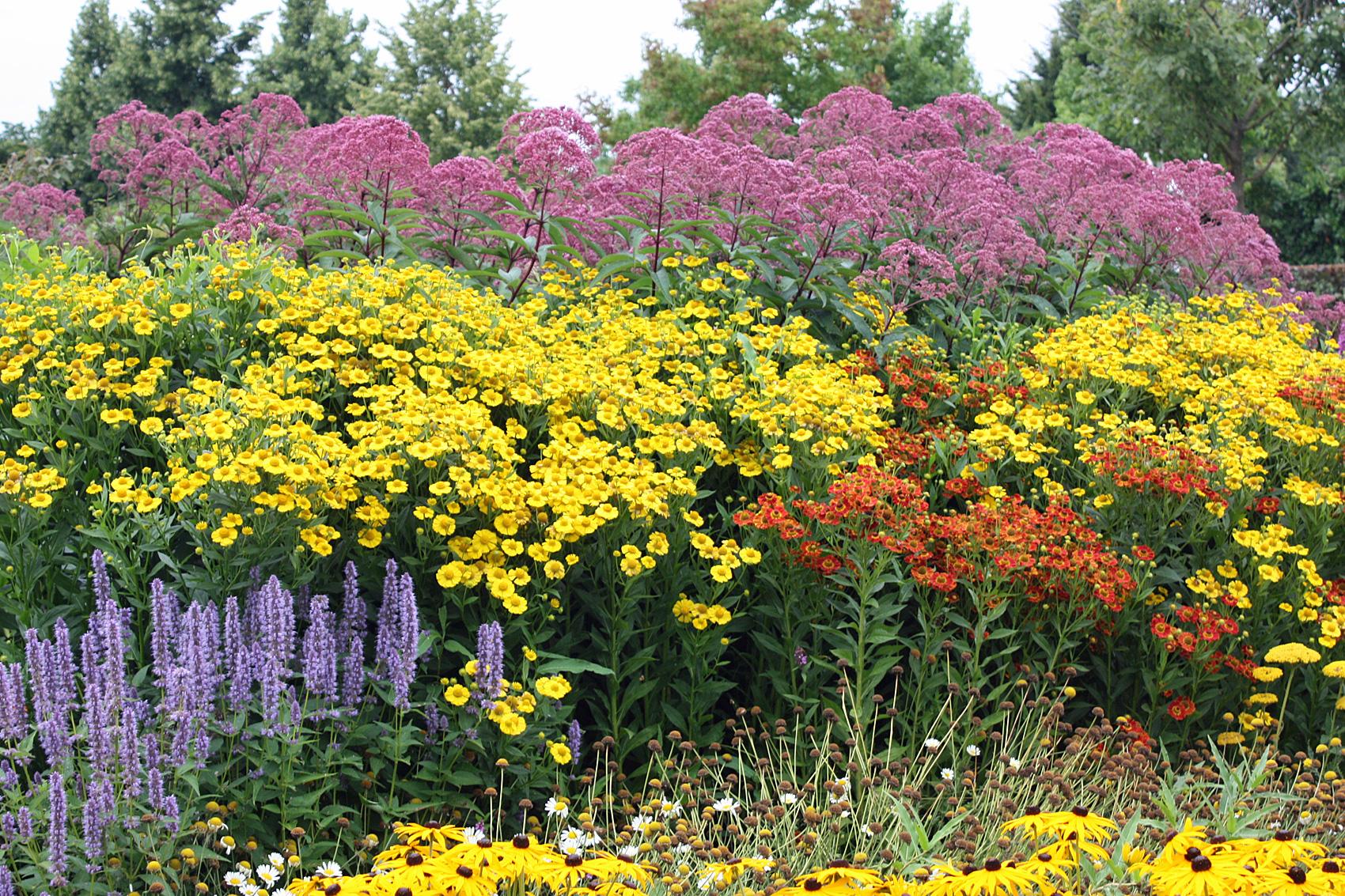 Unsere Empfehlung für Ihr Blumenbeet und für Rabatte