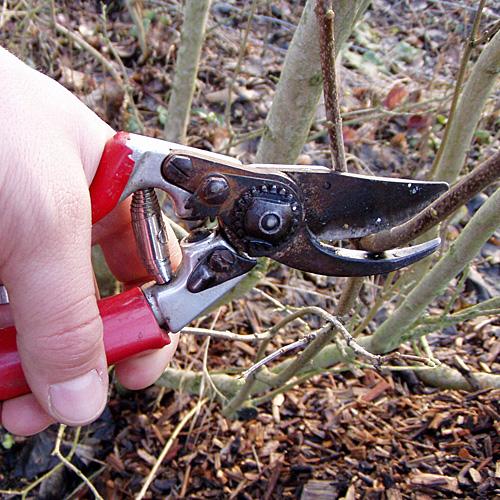 Sträucher und Bäume im Garten schneiden