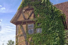 Kletterpflanzen - Fassadengrün Sichtschutz Vertikales Grün