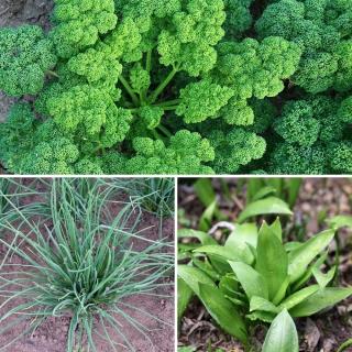 Kräutermischung Salat