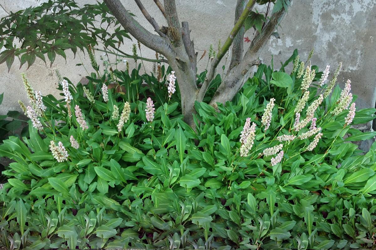Gehölz-Unterbepflanzung