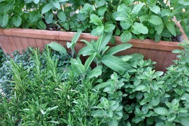 Für den Kräutergarten oder den Balkonkasten