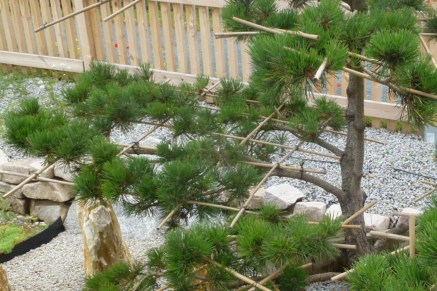 pflanzenst tzen mit bambusst ben bambusklammern oder einfachen schn ren native plants. Black Bedroom Furniture Sets. Home Design Ideas