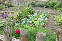 Mischkulturtabelle für unser Gemüse-Saatgut