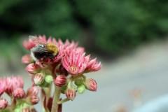 Schmetterlings- und Bienenweiden