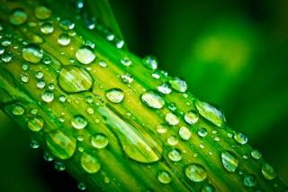 Gartenbewässerung einfach selber bauen