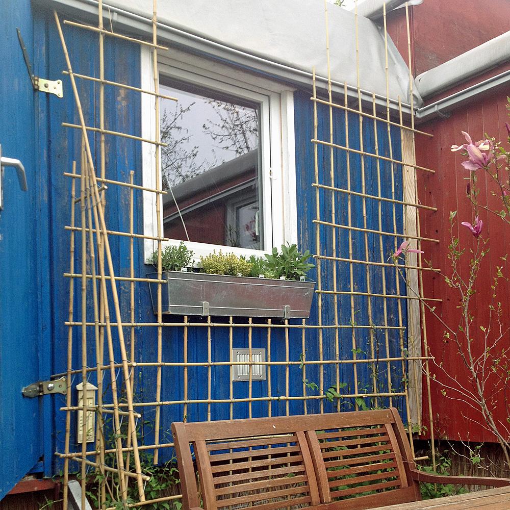 Bambusklammern Tonkinklammern Rankgitter Selber Bauen Native