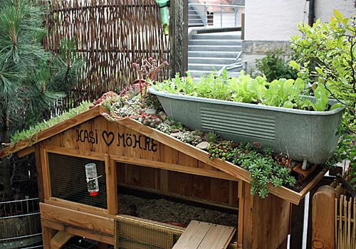 Kaninchenstall mit Dachbegrünung selber bauen