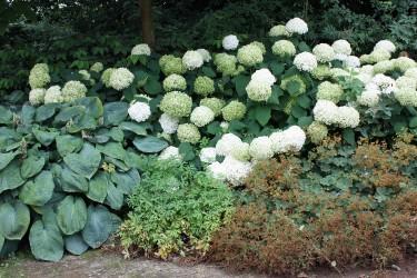 Fertige Pflanzen-Sets für Ihren Garten