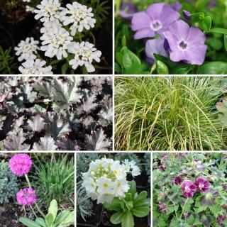 Pflanzenset für Balkonkästen in halbschattiger Lage
