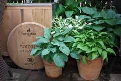 Schöne Pflanzen für Balkonkästen und kleine Töpfe