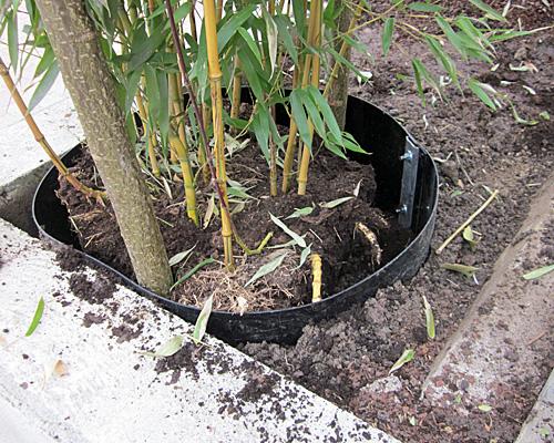 Rhizomsperre für Bambus