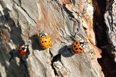 Nützlinge zur biologischen Schädlingsbekämpfung