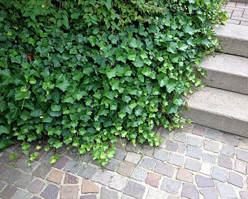 Beet mit kies gestalten  Ob Bodendeckerpflanzen, Rindenmulch oder Kiesbeet anlegen | Native ...