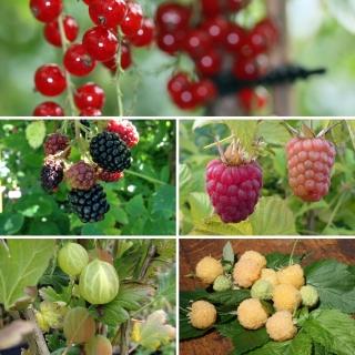 Vorschau: 5 Pflanzen für den Obstgarten