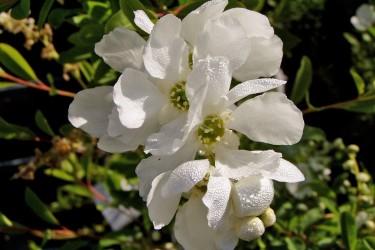 Farbenfrohe Blütensträucher für den Garten