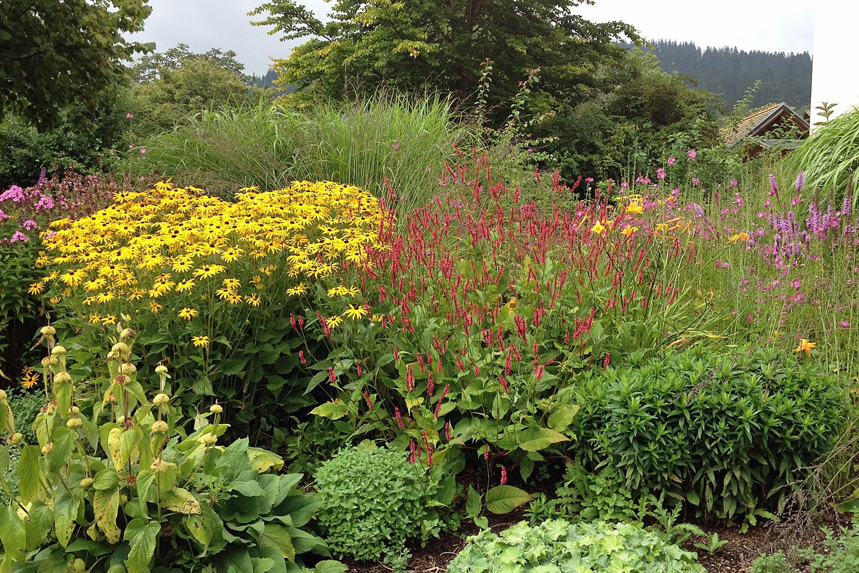stauden geordnet nach familien native plants