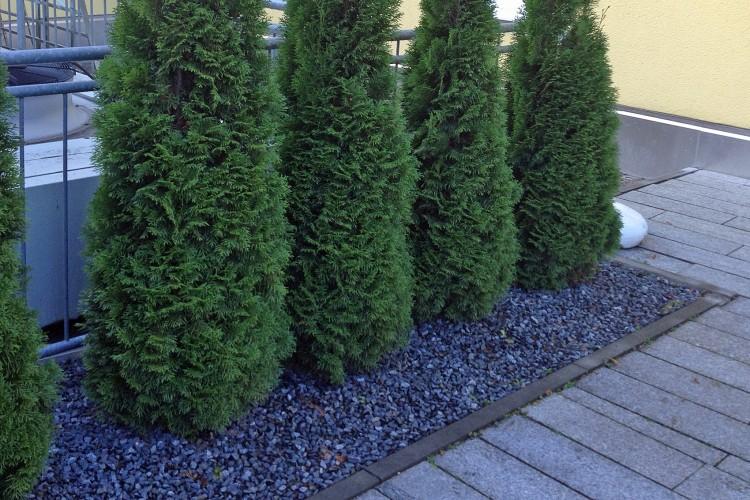 Pflanzen für Moderne Gärten