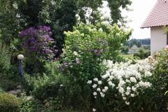 Schöne Blütensträucher für den Garten