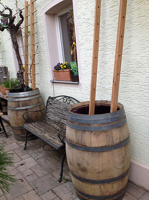 Weinfass mit Rankgitter bepflanzen