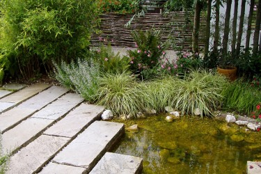 Pflanzen für den Uferbereich