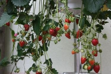 Obstbäume & Obststräucher: Gesunde Früchte aus eigenem Anbau