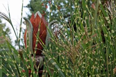Gräserwelt im Garten
