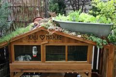 Kaninchenstall mit Dachbegrünung